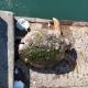 tartaruga-castellammare