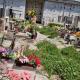 cimitero-degrado-erba