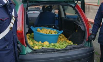 Limoni-carabinieri