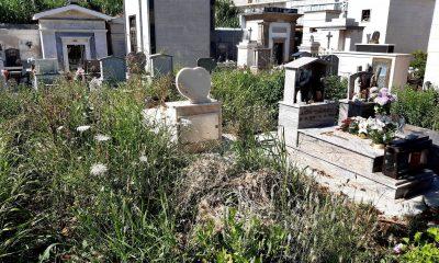 Cimitero erbacce